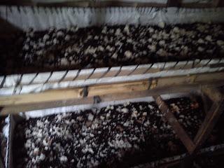 kandang cacing tanah