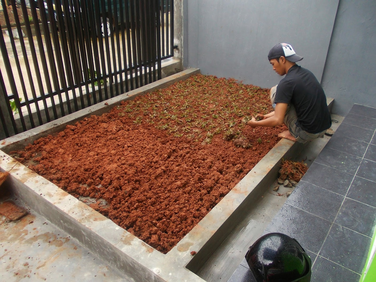GRAND RESIDENCE BEKASI TIMUR: RUMPUT GAJAH mini