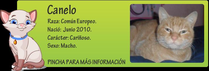 http://mirada-animal-toledo.blogspot.com.es/2012/04/canelo-lleva-mucho-tiempo-esperando-un.html
