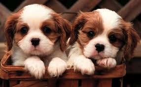 Puppies For Sale Short Story