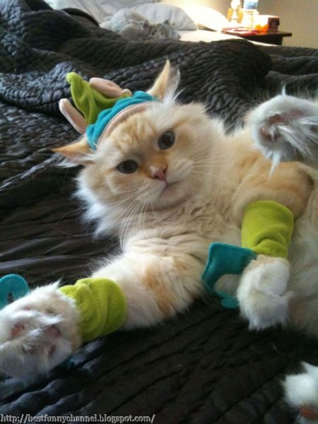 Cat in funny costumes.