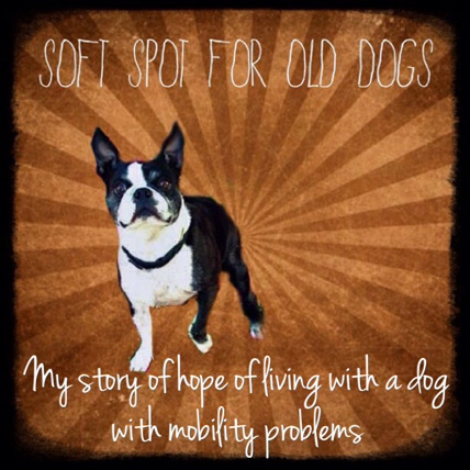 Soft Spot for Old Dogs