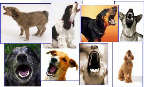 Quiet Dog Breeds Barking