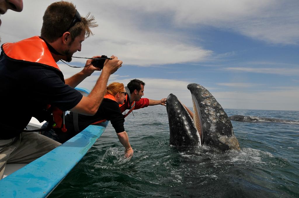 экскурсия на лодке к китам шри ланка