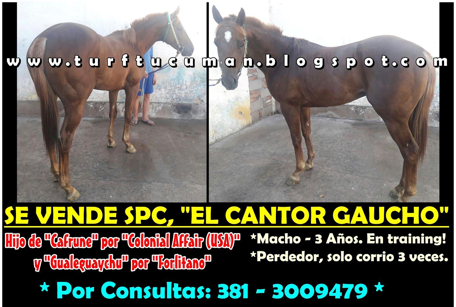 CANTOR GAUCHO