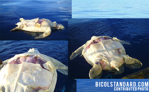 Dead sea turtle in Catanduanes prompts call for action