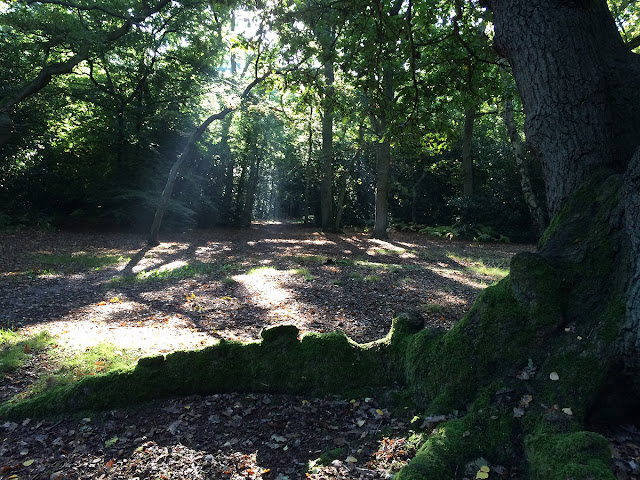 Sunlight through the trees on Hayes Common, 6 October 2013.
