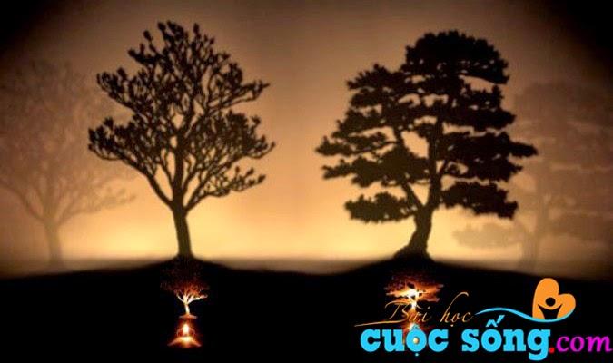 Nguyên nhân thất bại của rất nhiều người: Hai cái cây, bạn sẽ chặt cây nào