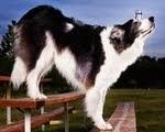 Anjing yang Menyeimbangkan Segelas Air