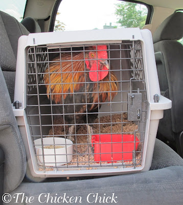 Dog carriers serve as excellent, temporary infirmaries for sick or injured birds.
