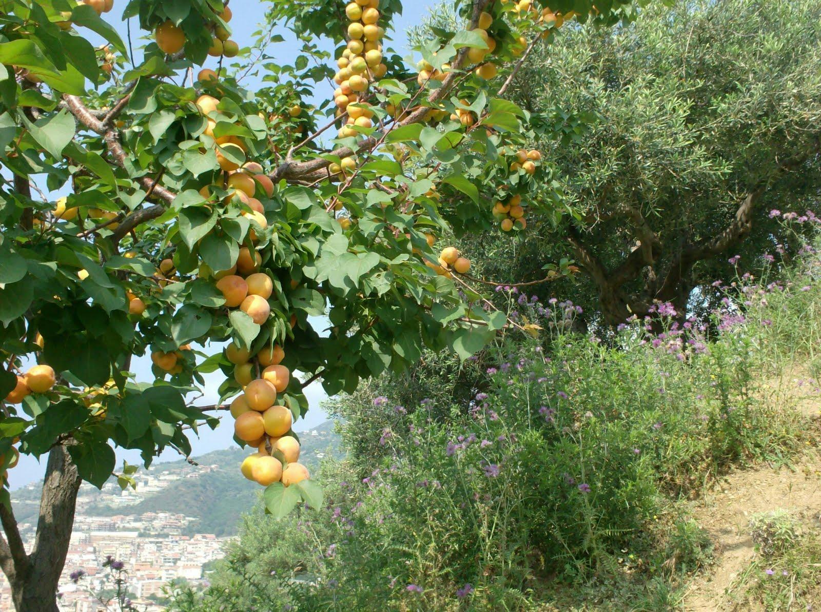 Piante Di Prugne : L orto di michele alcune coltivazioni dei mesi scorsi