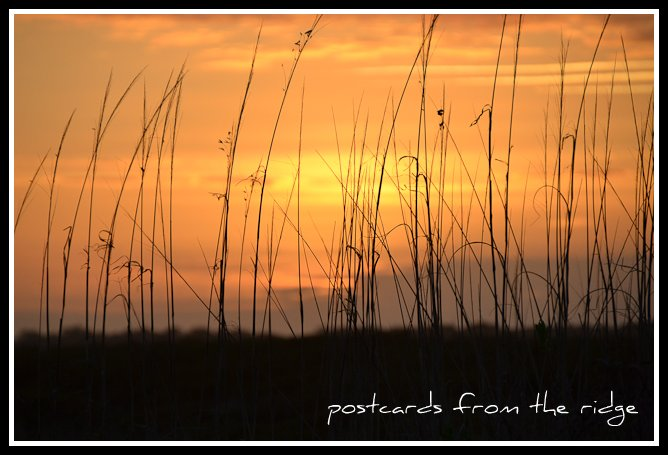Sunset through the dunes at Kiawah Island, SC. Postcards from the Ridge.