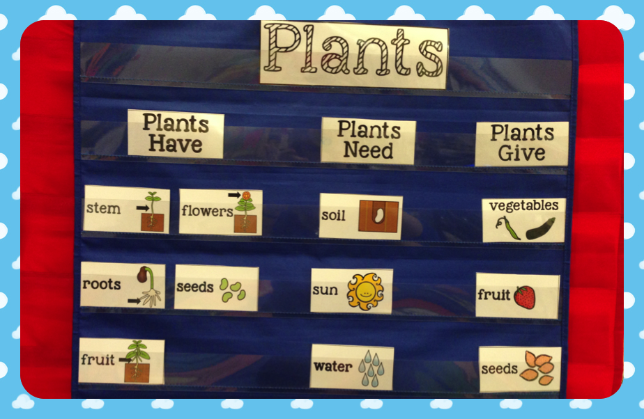 Plants in kindergarten, What they have, need and give