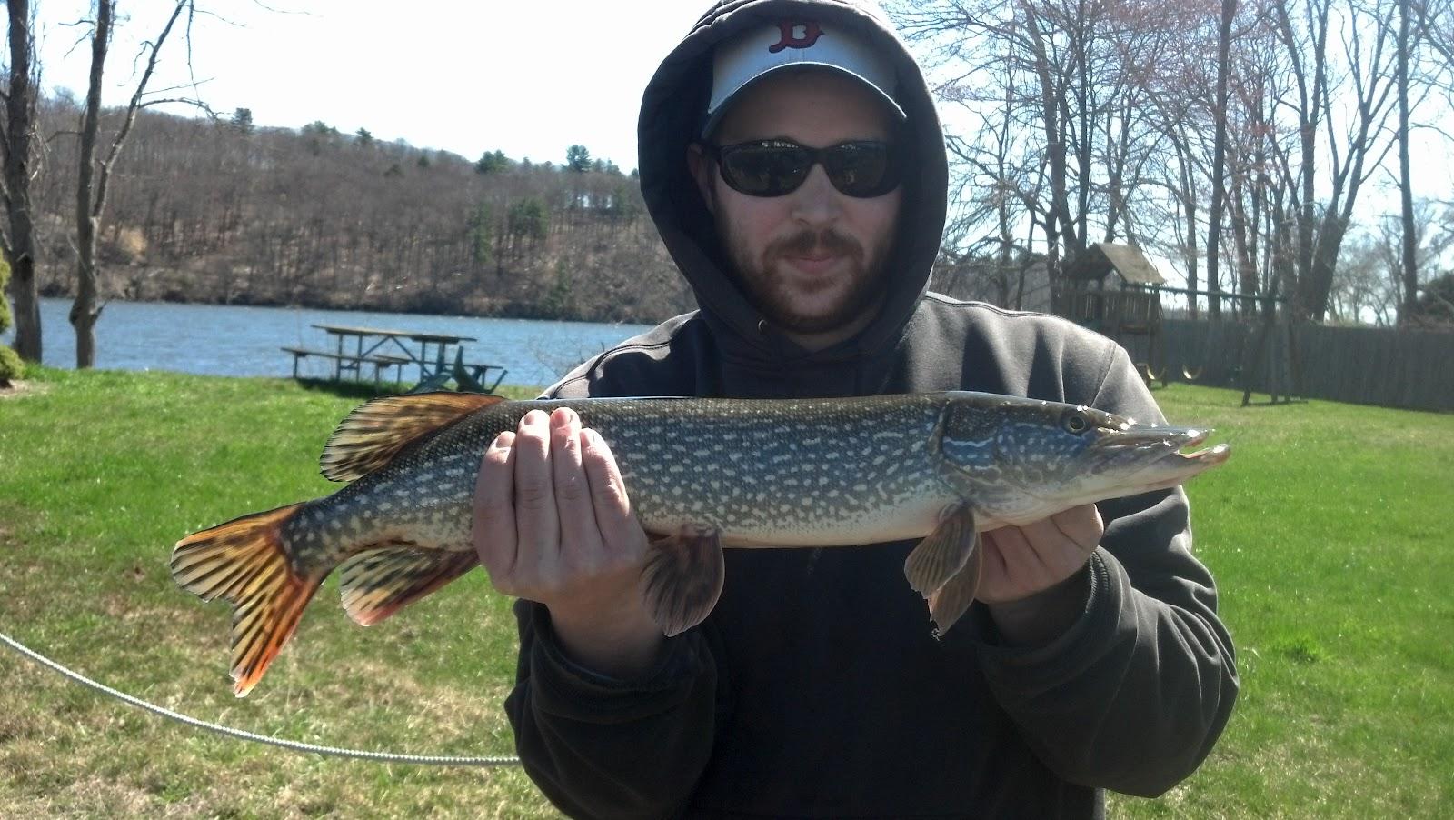 Haulin bass ct ct river shore fishing 4 07 for Bass fishing from shore
