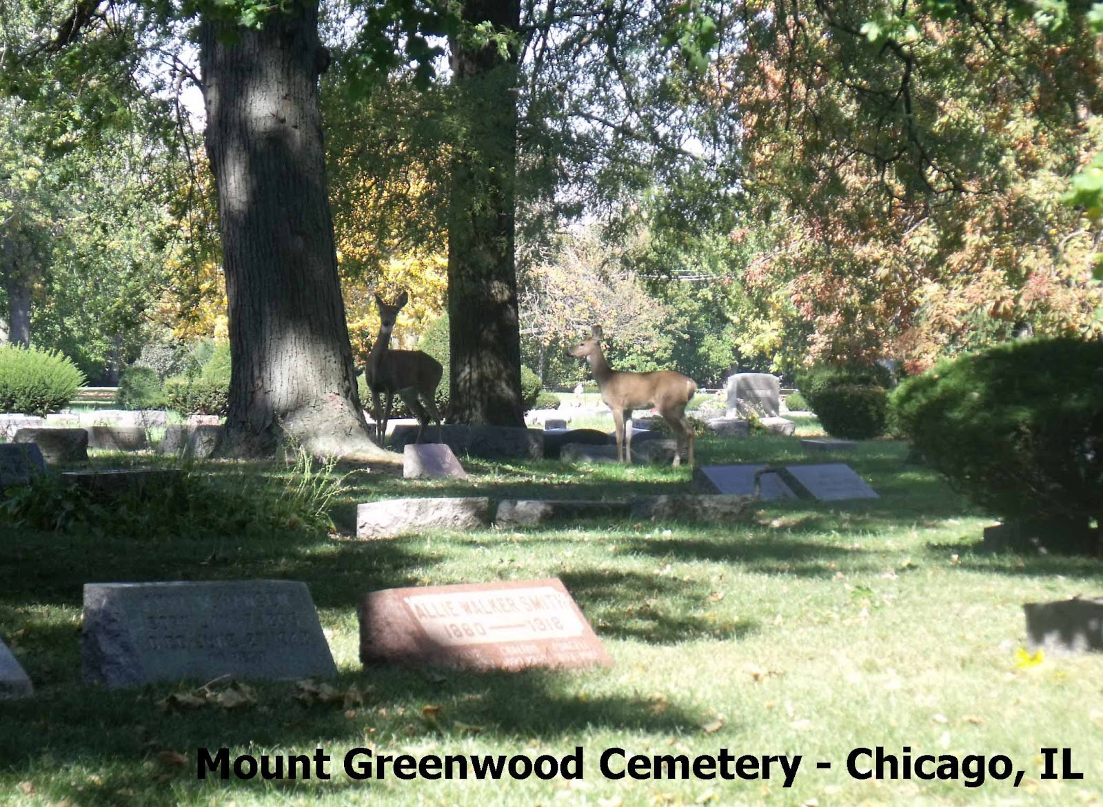 Cemetery today (10/2/2012)