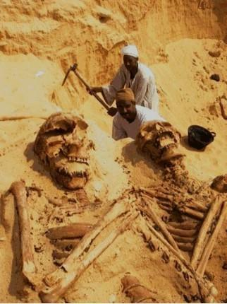 Giant Ancient Skeletons Of Unusual Size Of People Found In Saudi