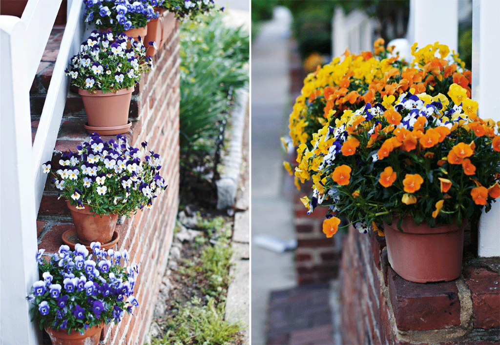 potted pansies along a staircase