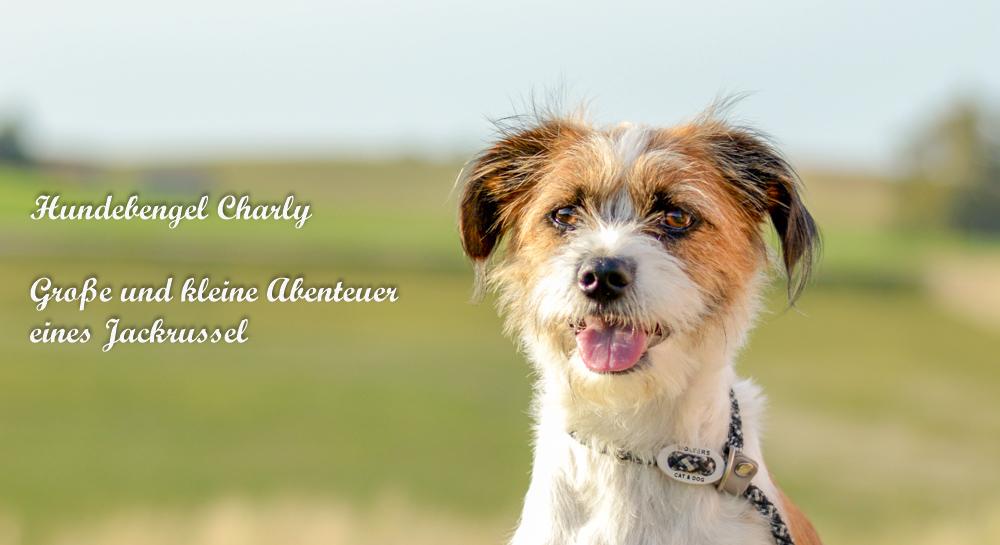 Hundebengel Charly / Hundeblog
