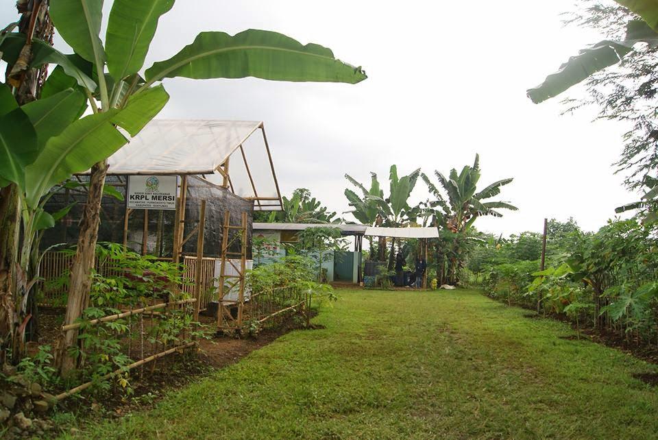 Kawasan Rumah Pangan Lestari Desa Mersi Banyumas