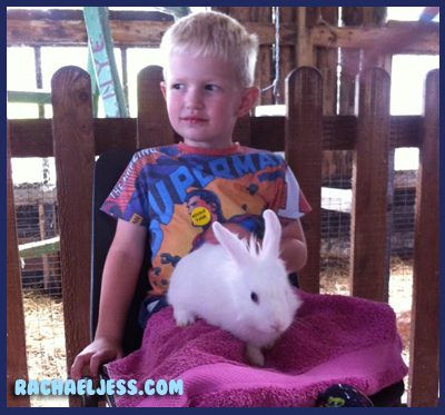 Petting time at Middle Farm