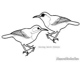 Mewarnai Gambar Burung Madu Kelapa