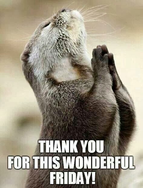 Good Morning Otter Meme : Friday s fantastic finds inspiration for moms