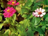 Terapi Pengobatan Herbal Kanker Serviks Akut