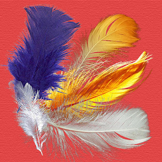 http://4.bp.blogspot.com/-bQQRpxEvZqw/VhQOecoyT_I/AAAAAAAABQM/obzlBVUXEDk/s320/feathers.jpg
