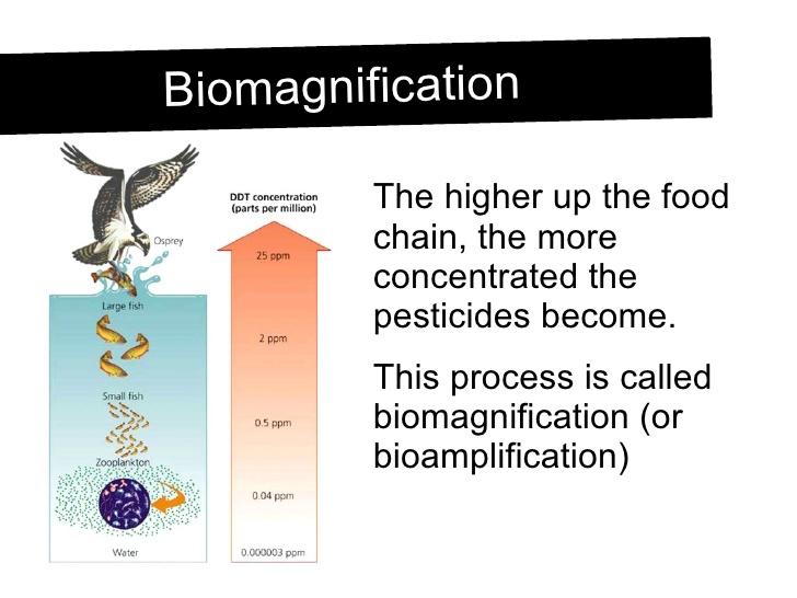 biomagnification lab report essay