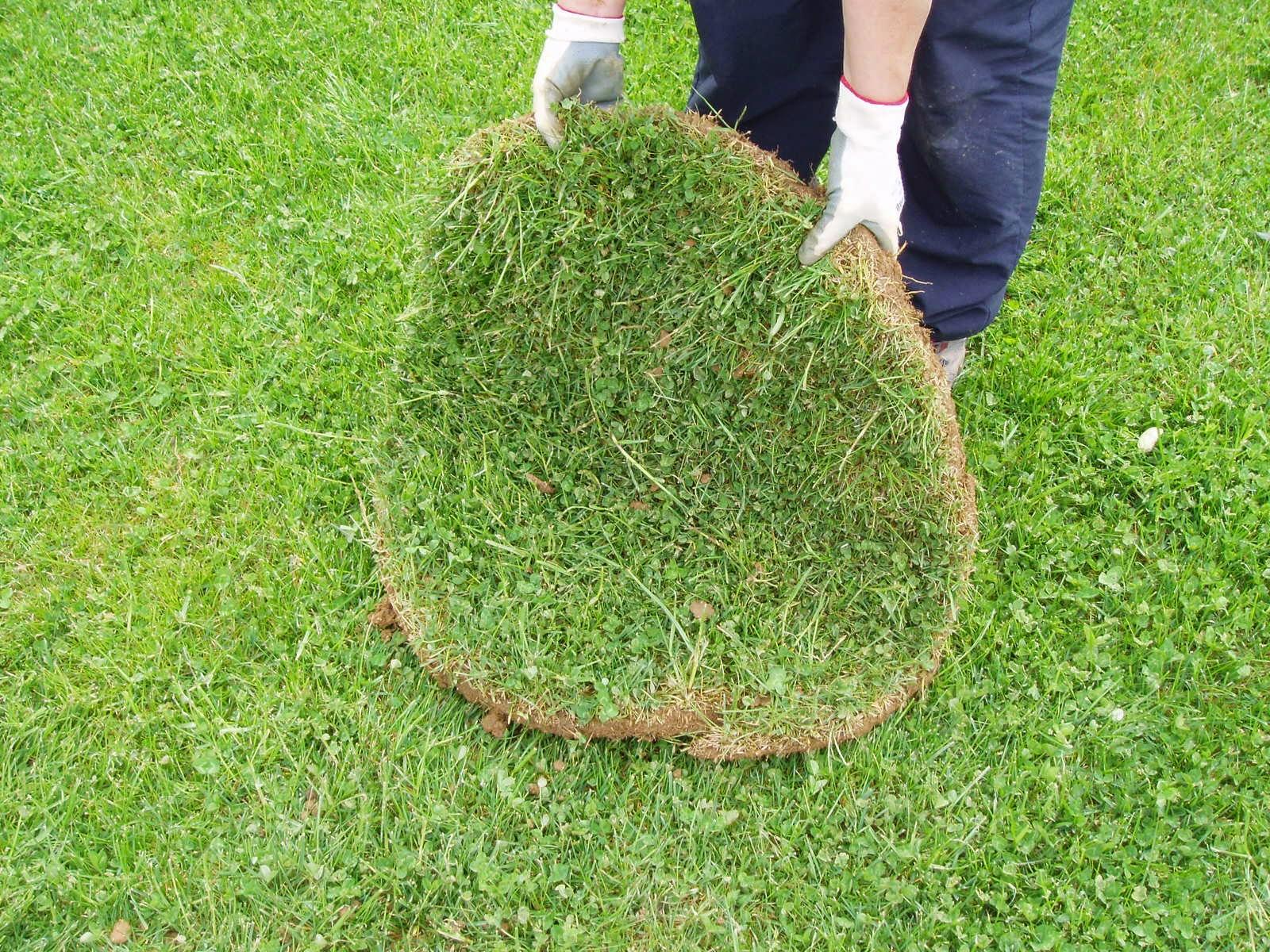 Metido en jardines plantar un rbol sin da ar el c sped - Como plantar cesped en el jardin ...
