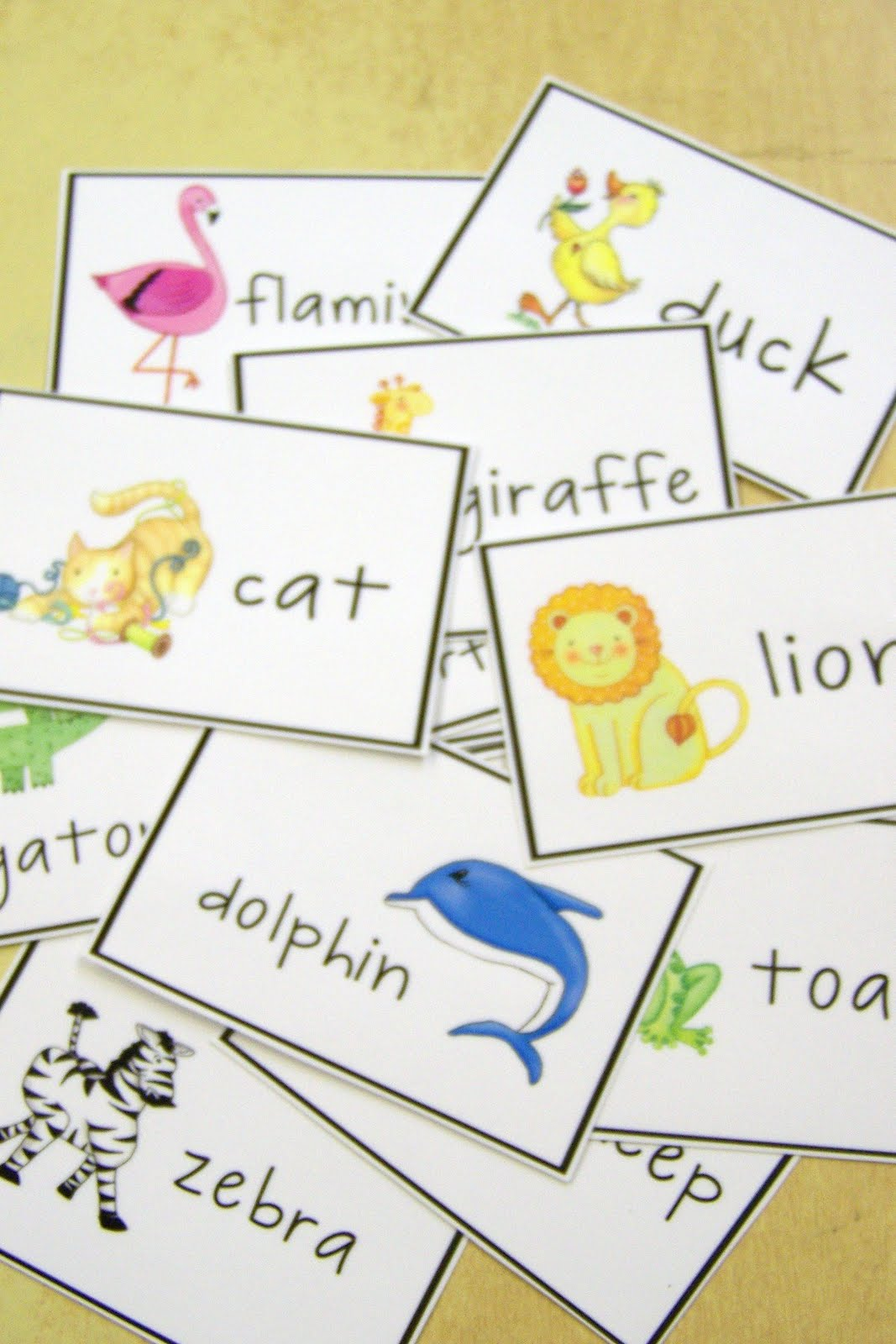 doodle bugs teaching  first grade rocks    abc order activity