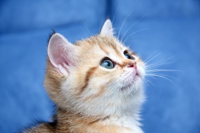 صور قطط - Cat Pictures