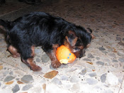 Su primer juguete