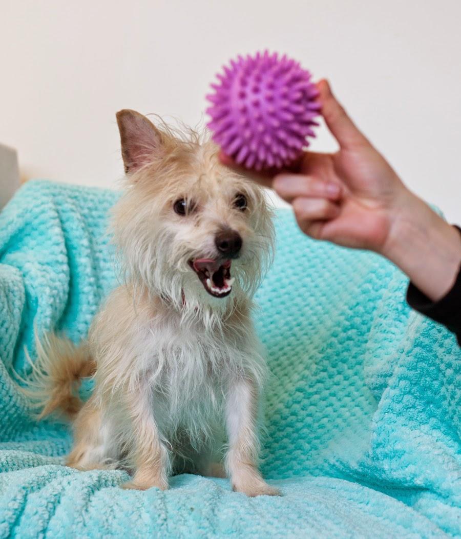 Shelter Dogs of Portland: \