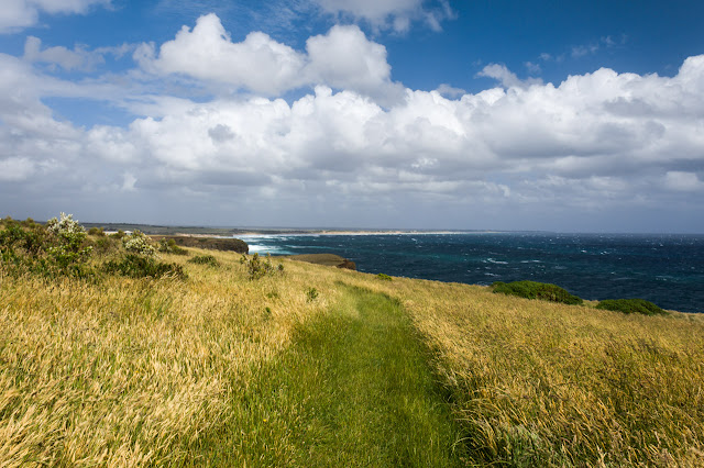grass path of the george bass coastal walk