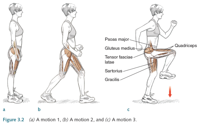 a biomechanical analysis of jogging vs Biomechanical principles in sprint running basic concepts iain fletcher content stride length stride frequency newton's laws biomechanical analysis of sprinting: decathletes vs champions br j sports med 15: 177-81 mann, r & herman, j (1985) kinematic analysis of.