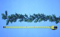 Bamboo Garland2