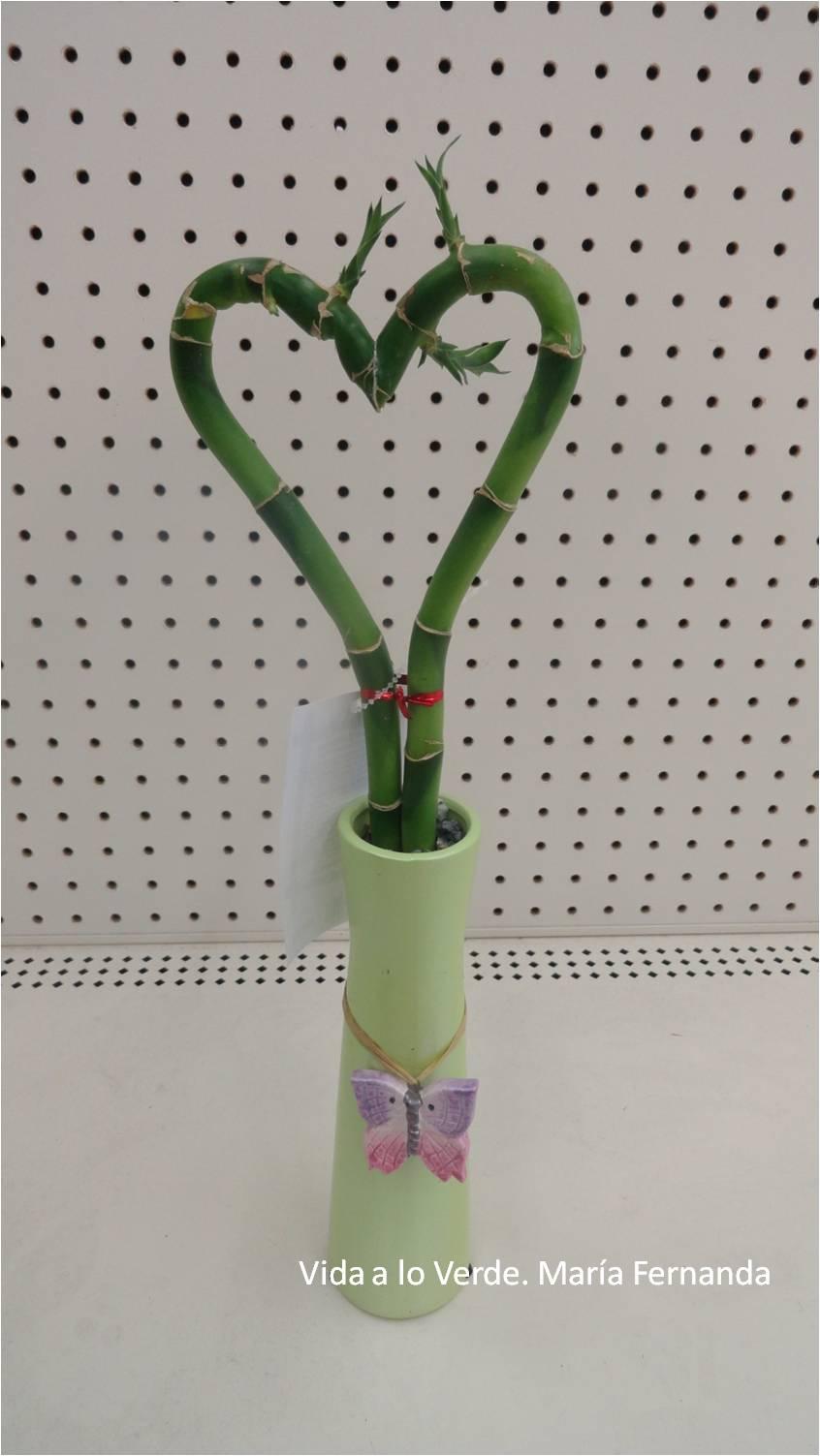 Bambu Seco Top Ideas Para Decorar Con Bamb With Bambu Seco  ~ Cañas De Bambu Verdes Para Decorar