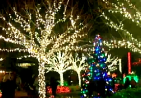 Pinellas county extension timely topics holiday lights at - Largo botanical gardens christmas lights ...