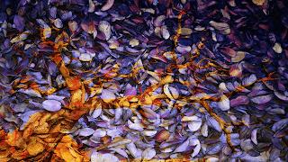 8 Arvore_despida_ sobre texturas de folhas_Sobreposição de cor_255
