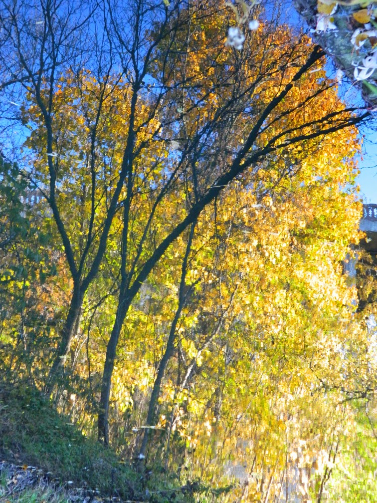 Autumn foliage reflection Taylor Creek Park by garden muses-not another Toronto gardening blog
