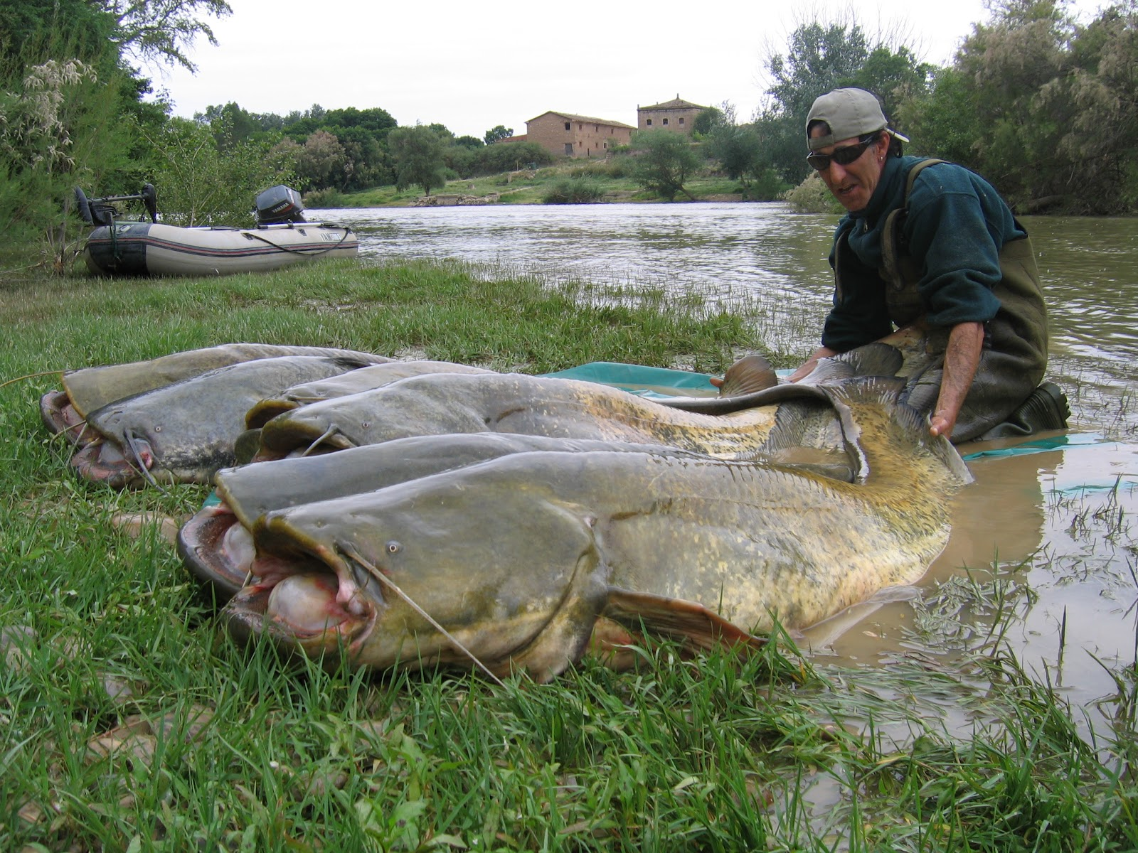 Catfish fishing guide in the river ebro catfishing and for Cat fishing 2