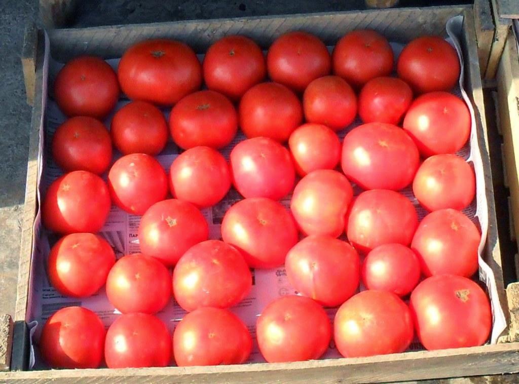 Детерминантные помидорки поспевают