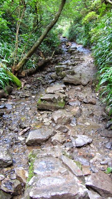 Takaosan path 6