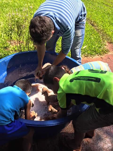 Perritos rescatados en la selva 7