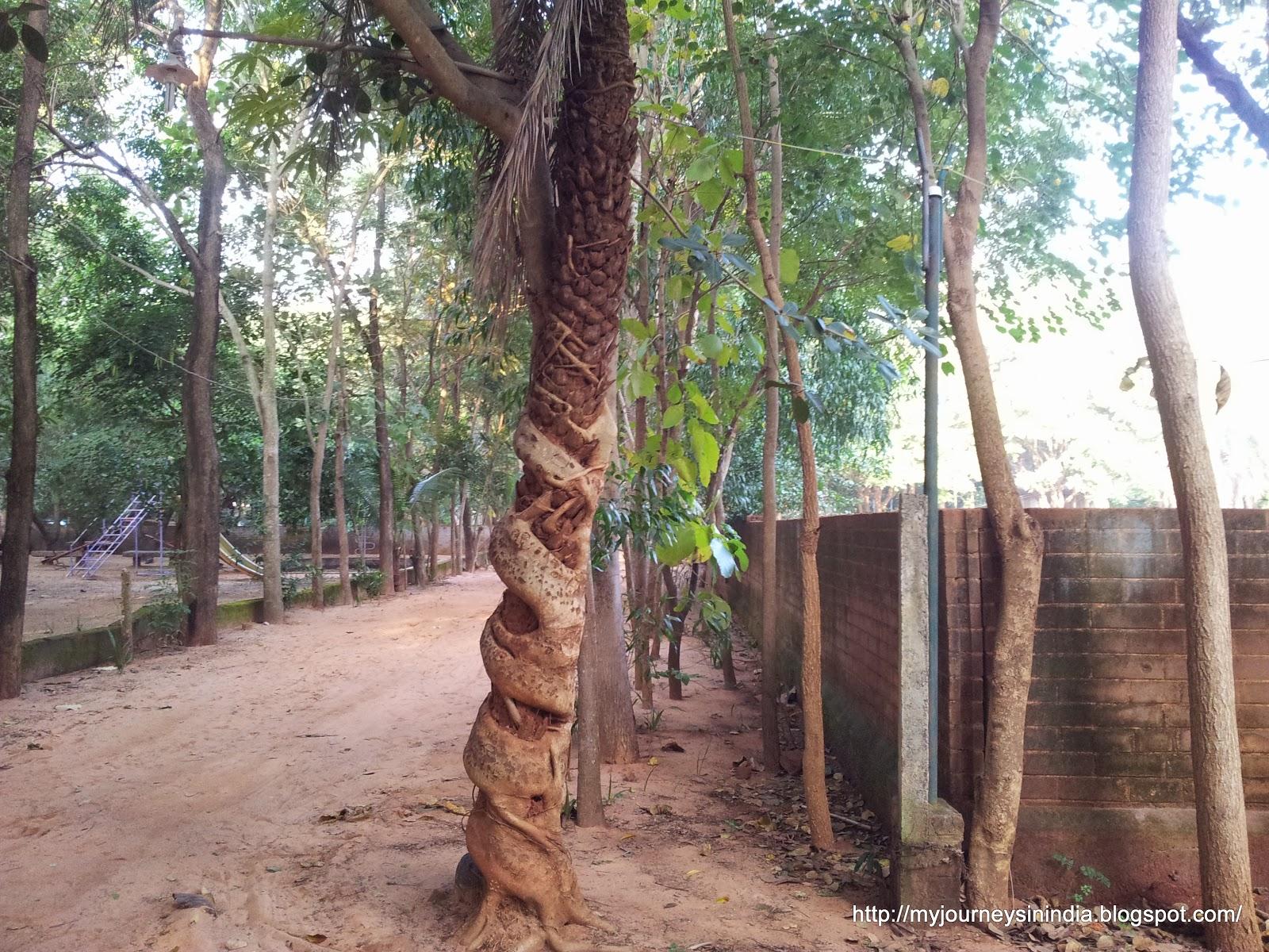 Tree on Tree