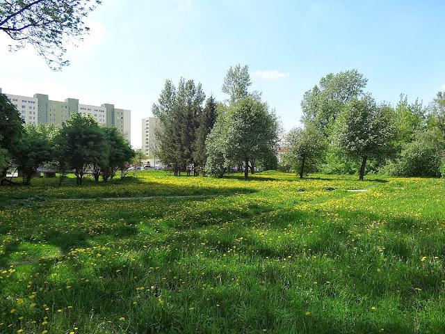 Witolińskie łąki