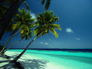 Amazing Beach View HD Nature Wallpaper 3D