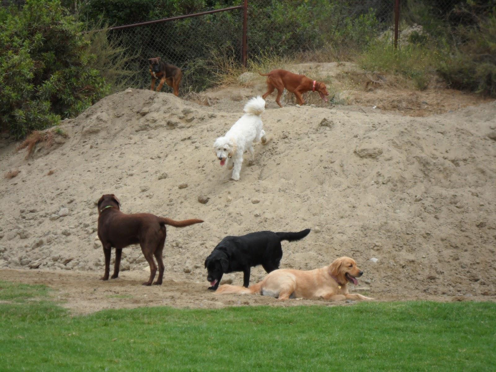 Friends Of Laguna Beach Dog Park