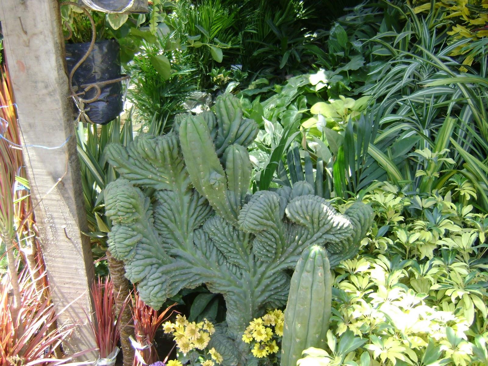 Jardines y macetas fotos de plantas de interior y exterior for Cactus de exterior